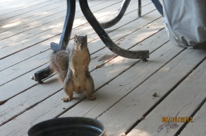 Outlaw Squirrel