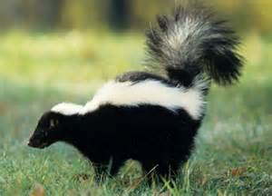 I Smell Like a Skunk | Saying Nothing in Particular