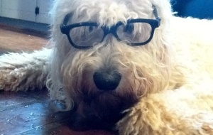 Haggis in glasses